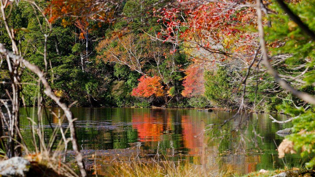 nikko Rekomendasi 8 Tempat Wisata Paling Romantis Di Jepang Saat Musim Gugur Autumn