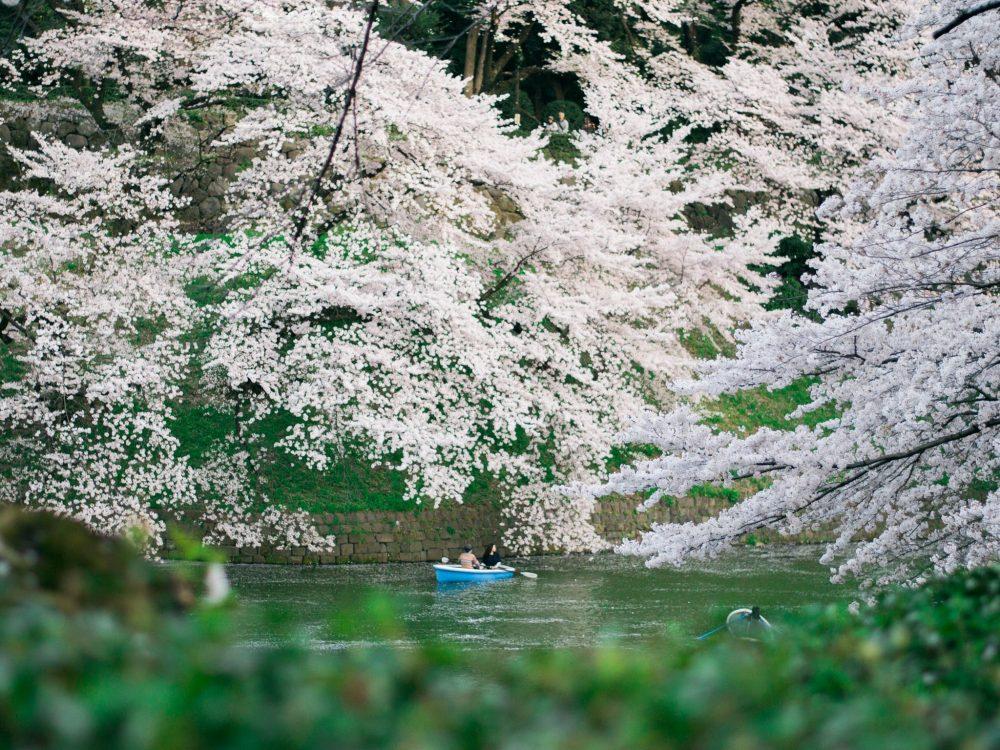 8 Cidorigafuchi Rekomendasi 30 Tempat Wisata Jepang Terbaik Untuk Anda